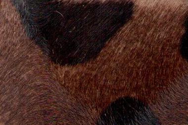 Animal-alix-940