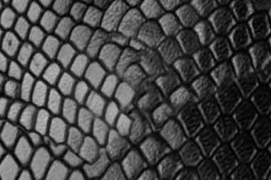 Leguanoptik-schwarz